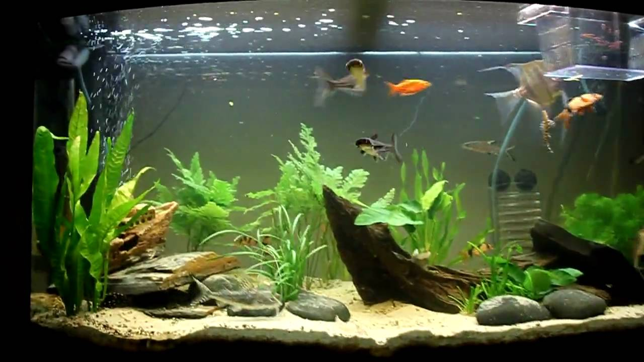 our planted aquarium juwel vision 180 hd youtube. Black Bedroom Furniture Sets. Home Design Ideas