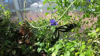 St. Louis Proud: The Butterfly House