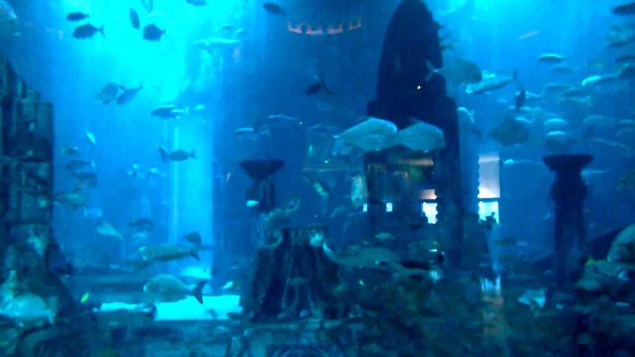 Atlantis Aquarium Palm Jumeirah Dubai Youtube