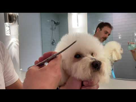 Tips & Tricks on Trimming your Dog Around the Eyes Safely!