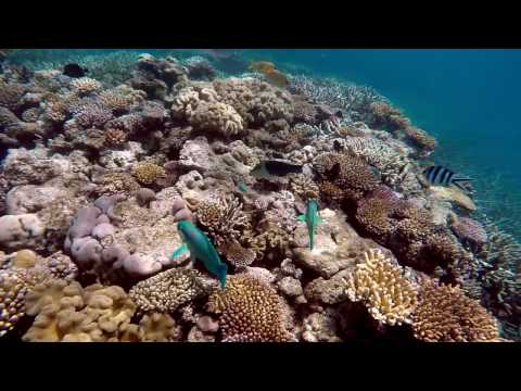 Experience the Great Barrier Reef. 20 Minutes of Peaceful Relaxation!