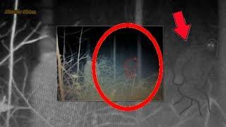 Пугающее Жуткое Существо Заснято в Тёмном Лесу .