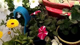 Important Gardening Hacks/ Tips/Tricks जो आपको जरूर पता होनी चाहिए,anvesha,s creativity