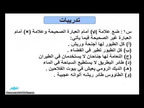 طيور لاتطير لغة عربية للصف الرابع الإبتدائي موقع نفهم موقع نفهم