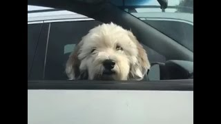 Girl CANNOT Handle Seeing This Cute Pup
