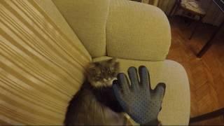 Отзыв о перчатке-чесалке (расческа для кошек)