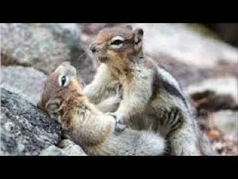 Squirrel's on 3.82250    4-24-2017