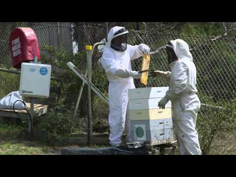 How The CSIRO Uses Tech To Track Bees