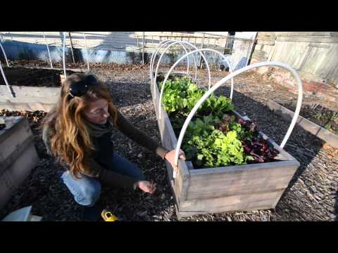 Homegrown Winter Gardening How To Build Your Own Greenhouse