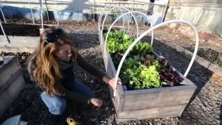 Homegrown: Winter Gardening & How To Build Your Own Greenhouse