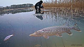 РЫБАЛКА НА ЖЕРЛИЦЫ НОЧЬЮ! Атака щуки на плотву! Зимняя рыбалка 2020