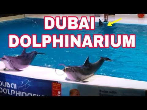 DUBAI DOLPHINARIUM INDOOR TOURIST SHOW