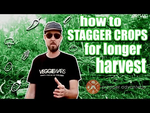 Staggering Organic Gardening Crops for Longer Harvests