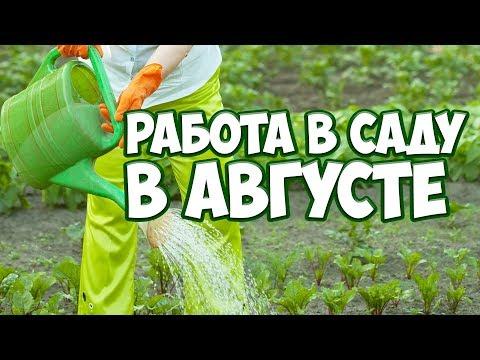 Работы в саду в августе ✔️ Огород