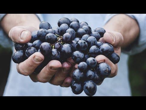 В Армении начался сбор винограда