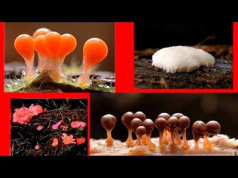 как очиститься от паразитов содой