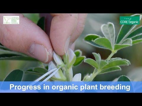 Progress in organic plant breeding - Main achievements from the COBRA project (Nov 2016)