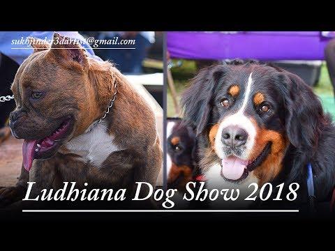 Ludhiana Dog Show 2018