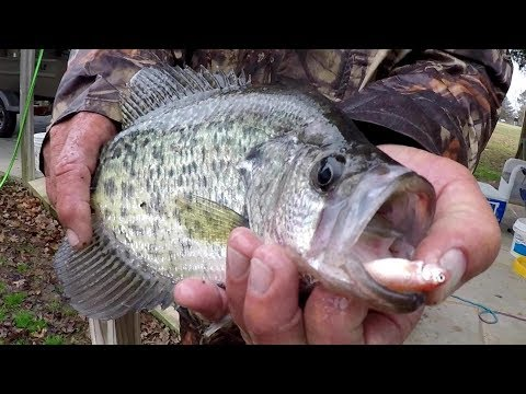 Crappie Fishing With A Bobber And Live Minnows
