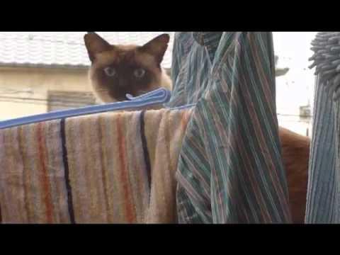 Cat + Balcony + Jump = LOL FAIL