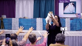 CFA International Cat Show 2018  Best of the Best