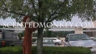 Review of Rumba By Balenciaga for Women-ScentedMonkey.com