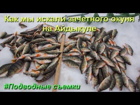 айдыкуль форум рыбаков 2017