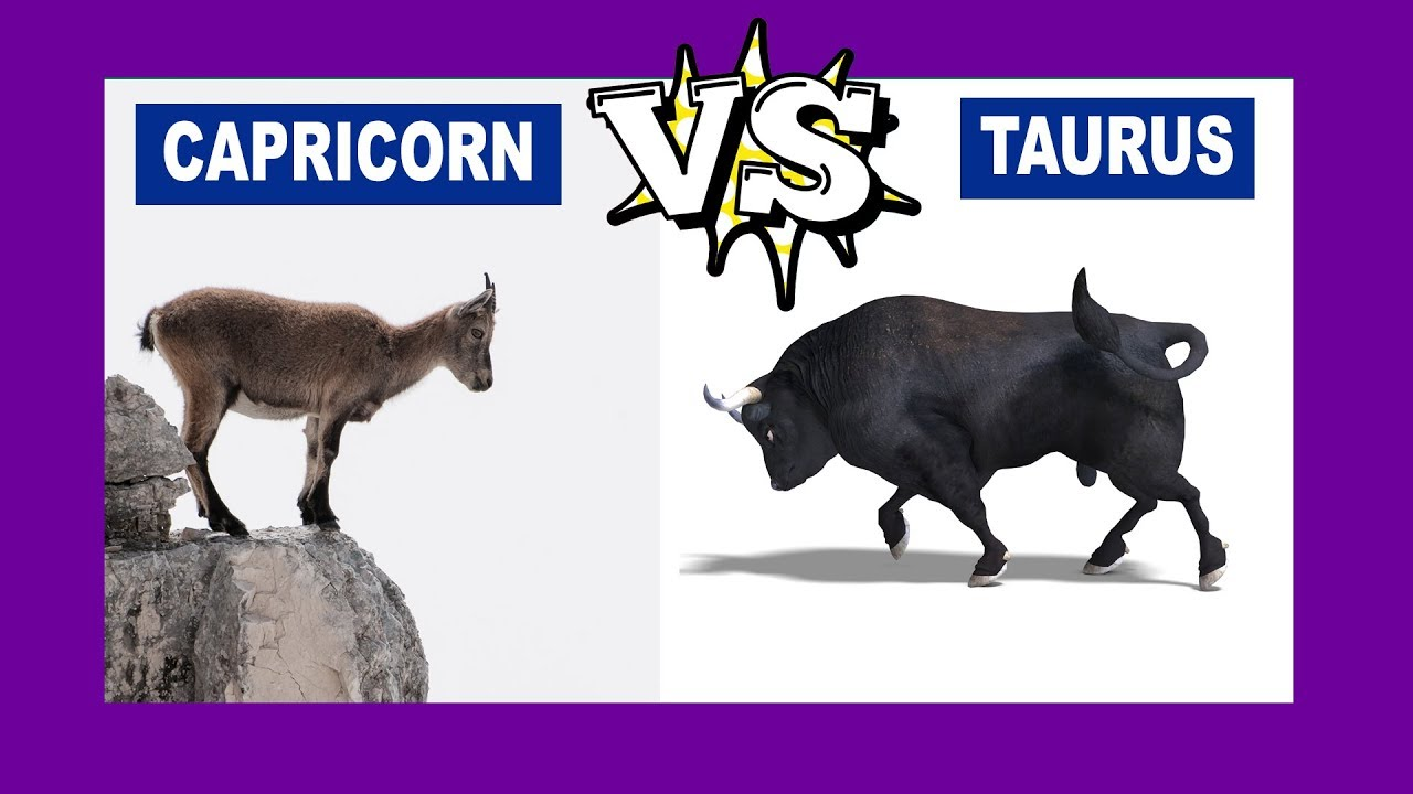 Capricorn vs  Taurus: Who Is The Strongest Zodiac Sign?