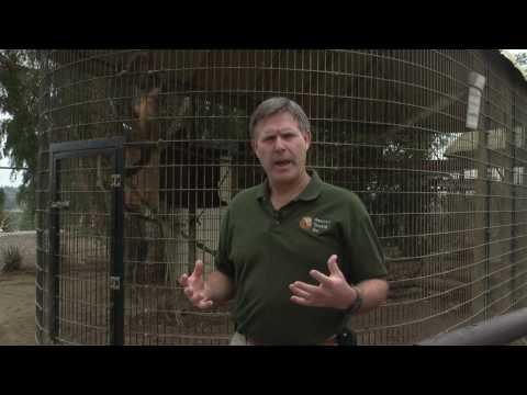 Zoo Animals : How Do Gorillas Defend Themselves?