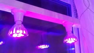 Светодиодные (LED) лампы для растений (фитолампы). Как это работает(, 2017-02-05T04:10:45.000Z)