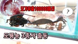 모기유충1000000마리를 신수 도룡뇽에게 먹이로 줘보았다. [정브르]