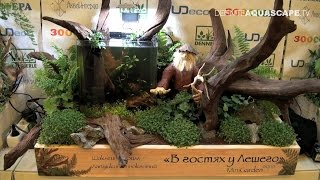 """MiniGarden Aqua design contest 2015 - 5th place """"Visiting the Forest Man"""""""