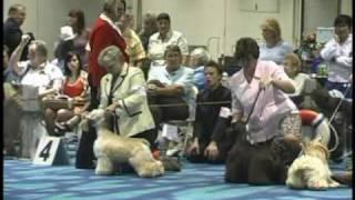 Pbj's Bayou Magic Wins Red Ribbon At The Cocker Spaniel National