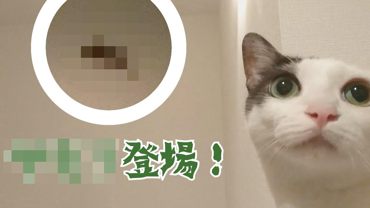猫と家族 珍入者に大パニック!