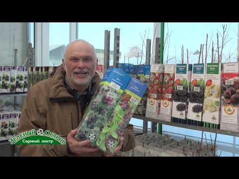 Выращивание экзотических для Урала культур, ирга, шелковица, годжи, боярышник, кизил