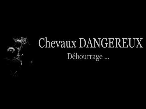 CHEVAUX DANGEREUX - JUMENT DOMINANTE- Marie Hélène GODBERT- www.theatre-equestre-de-picardie.f ©r