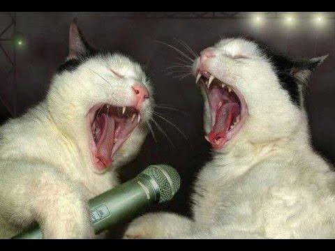 смешные кошки видео до слез
