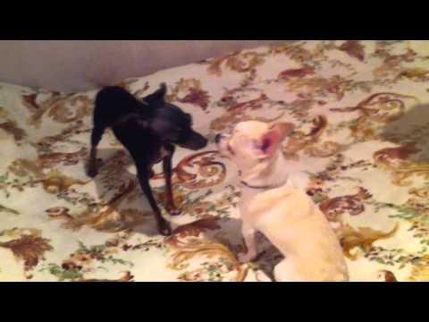 Puppies Playing With Parents 🐾 😍 [Epic Laughs]из YouTube · С высокой четкостью · Длительность: 6 мин7 с  · Просмотры: более 899000 · отправлено: 07.03.2017 · кем отправлено: Epic Laughs