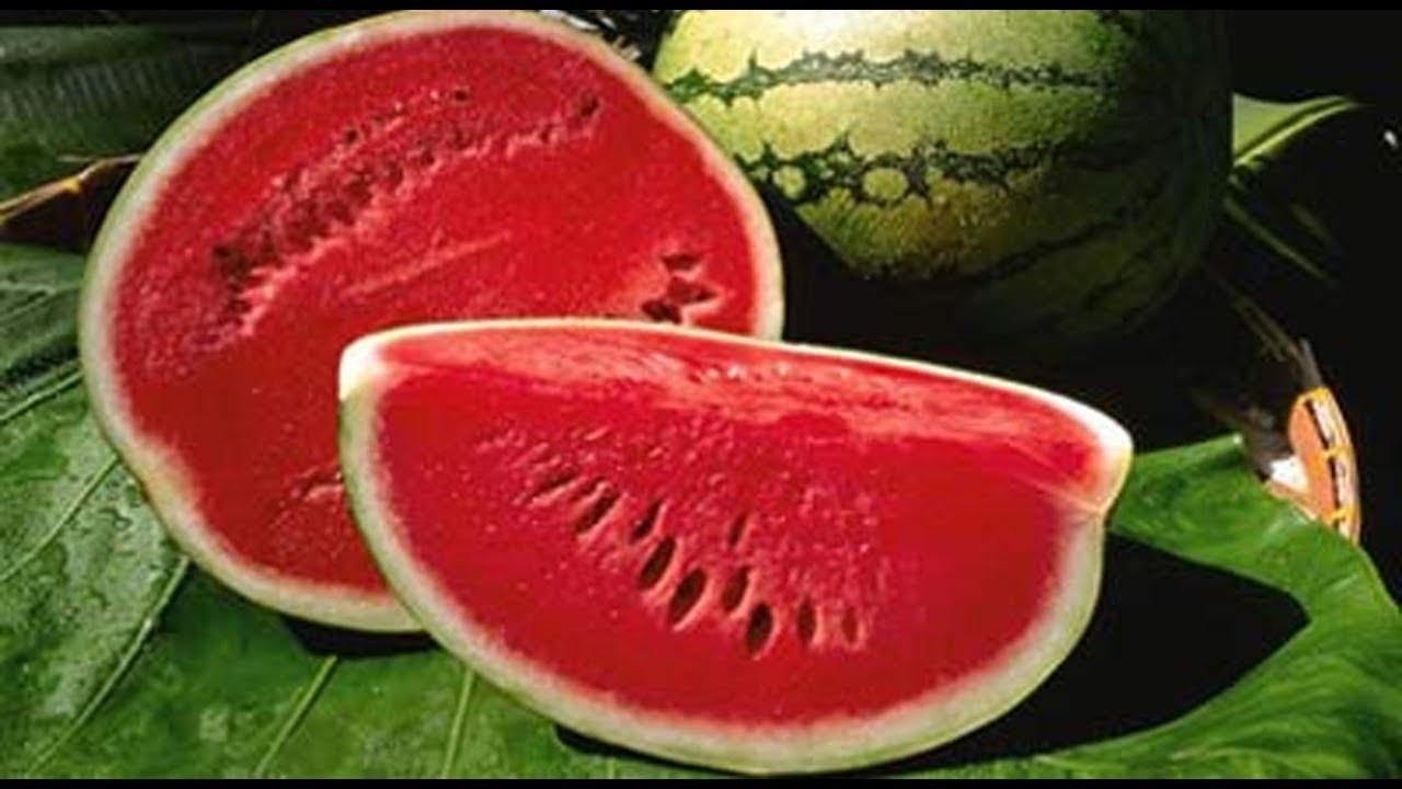 तरबूज खरीदते समय याद रखें ये 4 बातें तरबूज हमेशा मीठा व रसीला निकलेगा How  to buy Perfect Watermelon - YouTube