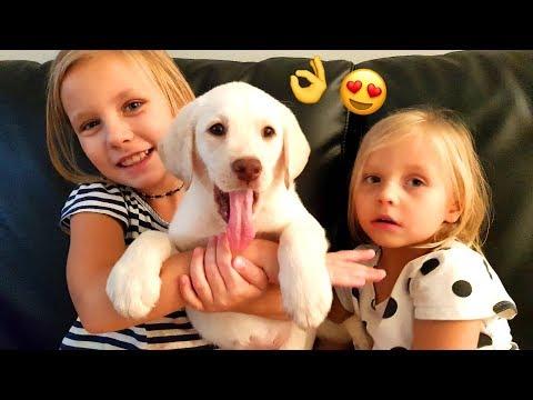Реакция Подарили Щенка Лабрадора  !!  Мечта Николь СБЫЛАСЬ ! СОБАКА !!!  Puppy kids react  EMOTIONAL