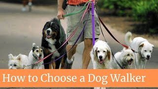 How to Choose a Dog Walker || How to find a dog walker || How to find a good dog walker