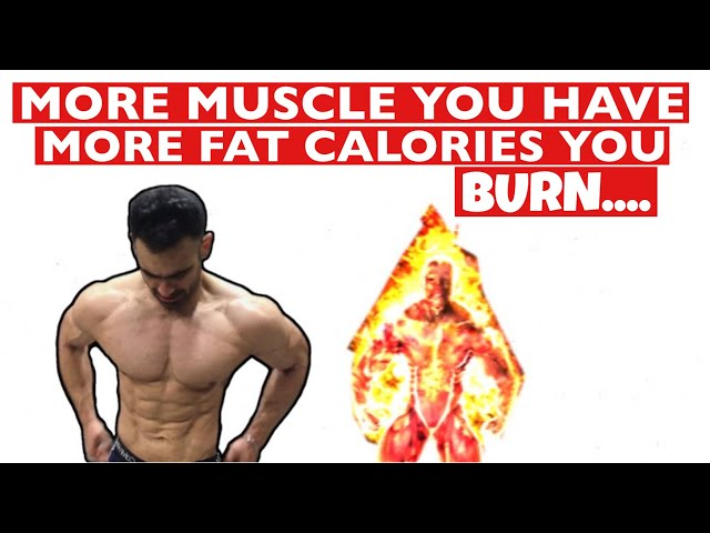 More Muscle You Have More Fat You Burn..