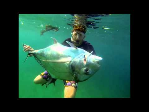 Spearfishing Port-gentil Gabon ABSOLUT BLUE