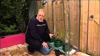 The Tomato Grow Pots or Plant Halos are perfect for tomato plants, peppers and beans, encouraging two sets of roots to develop - and that often means double ...