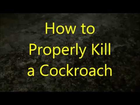 how to kill a cockroach youtube. Black Bedroom Furniture Sets. Home Design Ideas