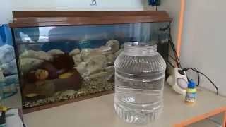 TERTEMİZ BİR AKVARYUM İÇİN akvaryum haftalık su değişimi