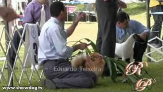 "Show Dog Pomeranian - ""kalua"" Best Of Breed In Brasil Kennel Club 18 04 2010"