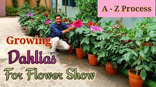 Download Video Growing Dahlias from Cuttings the full Tutorial. Learn from A - Z Process. MP3 3GP MP4