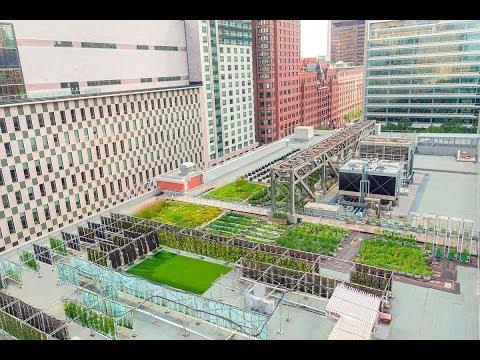 Laboratoire d'agriculture urbaine du Palais des congrès de Montréal