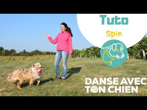 APPRENDRE LE SPIN À SON CHIEN EN 3 ÉTAPES - exercice dog dancing